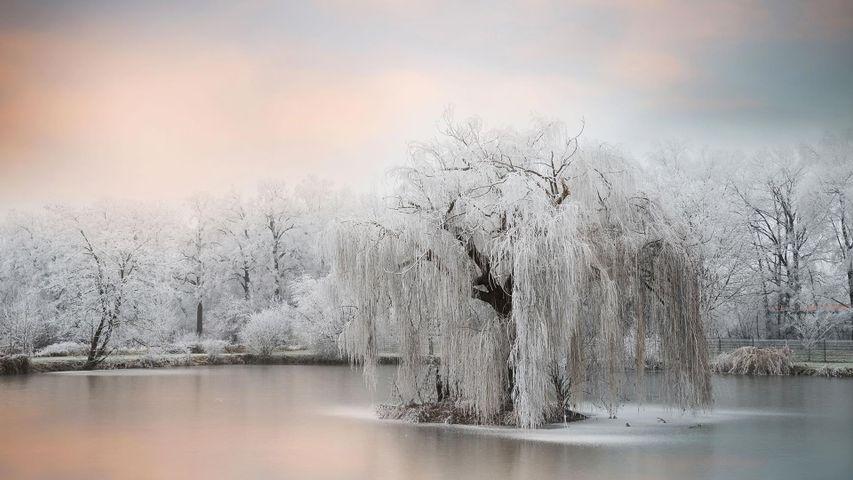池塘边结了冰的树