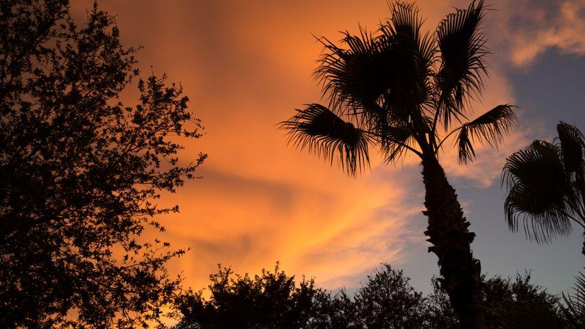 tree outdoor plant sky palm palm tree sunset cloud