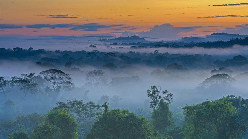 上弗洛雷斯塔附近晨雾中亚马逊雨林,巴西马托格罗索