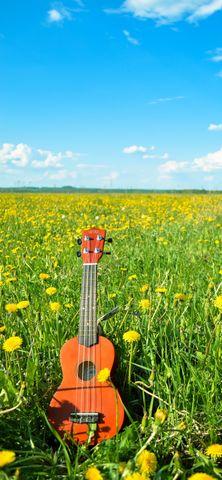 grass music yellow guitar bowed instrument flower poppy summer