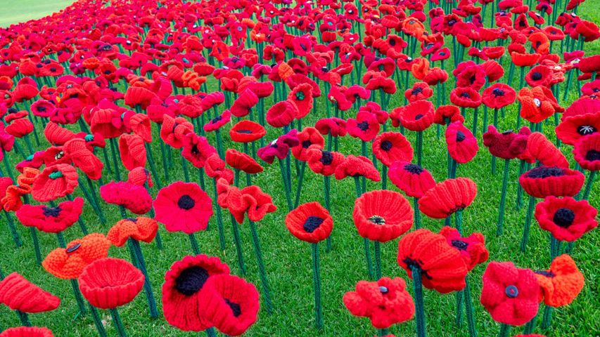 2018 Remembrance Day Poppy Project display of handcrafted poppies in Kings Park, Perth