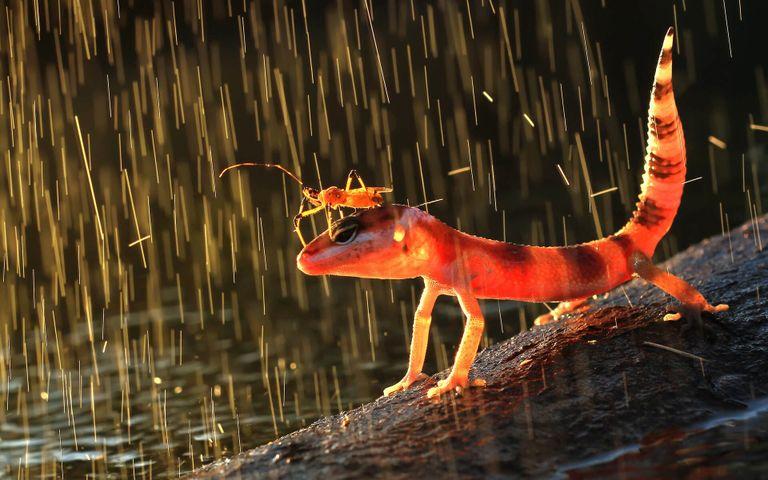 water animal fish orange salamander