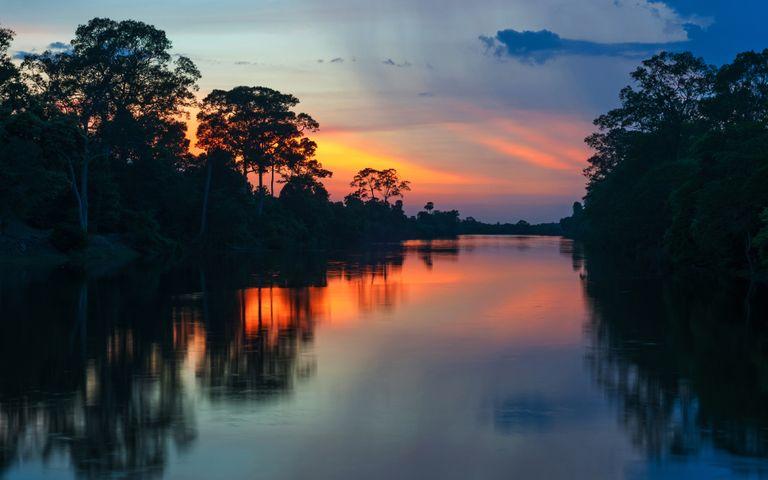 Amazon Rainforest Windows 10 Theme