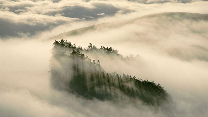 亨利考威尔红杉州立公园中的海岸红杉,加利福尼亚