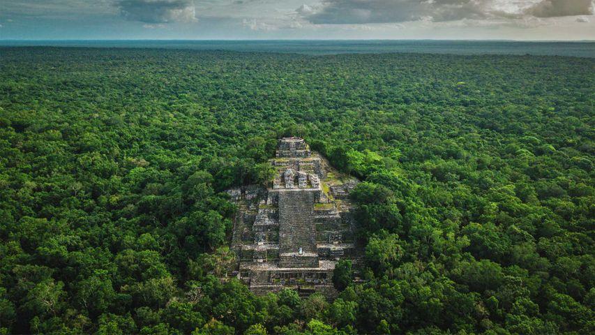 「カラクムルの古代マヤ文明遺跡」メキシコ, カンペチェ州