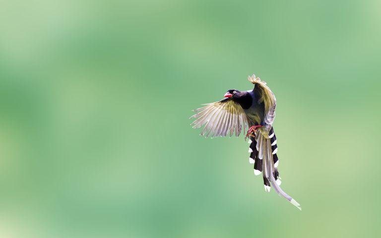 animal bird flying insect hummingbird
