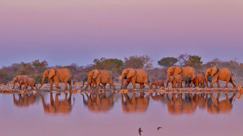 At Kruger National Park, South Africa, for World Elephant Day