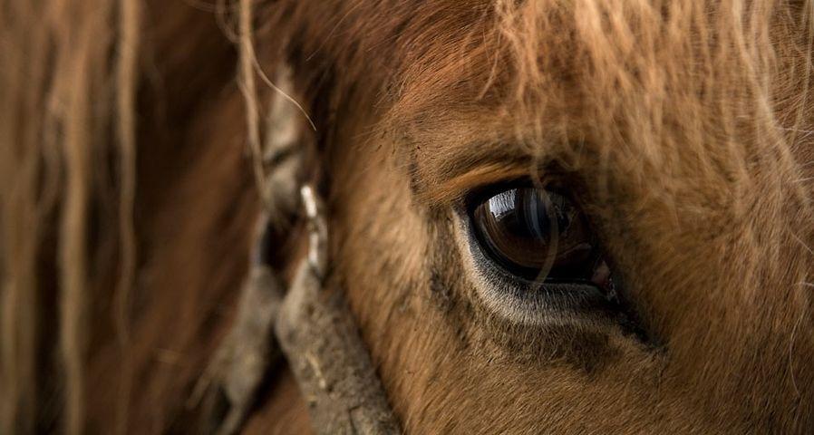 Close up of horse eye