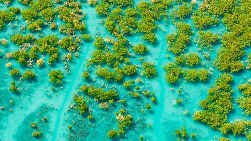 Aerial shot of mangroves at King Sound, Western Australia