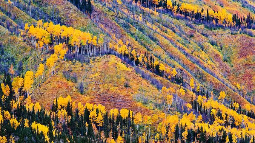 Fall Colours, Toad River, Northern British Columbia