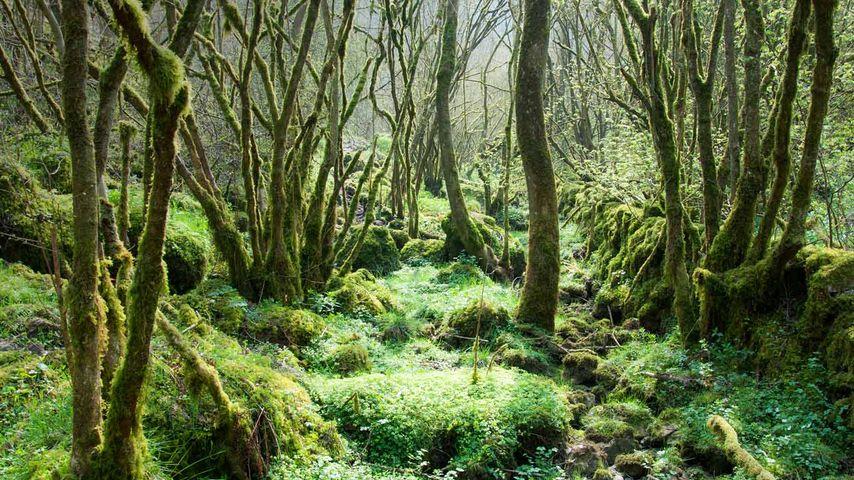Monk's Dale, Derbyshire Dales National Nature Reserve, England