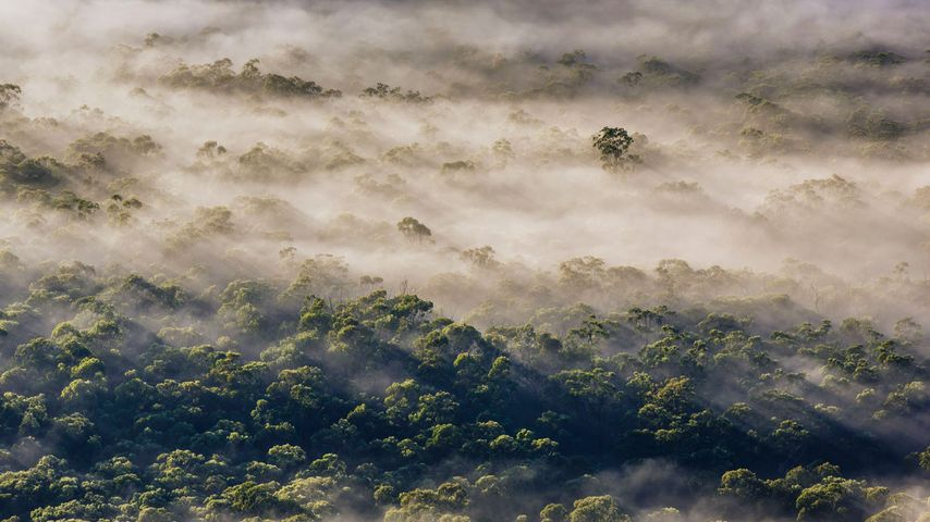 Fog in Megalong Valley, New South Wales, Australia