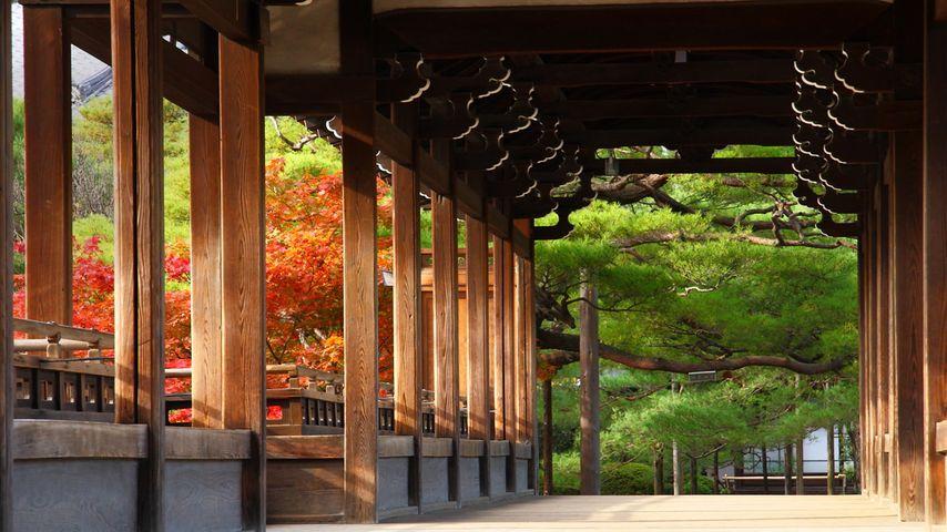 「平安神宮」京都, 左京区