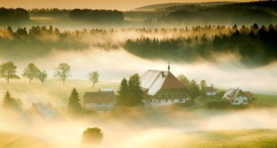 德国巴登符腾堡州黑森林的晨雾