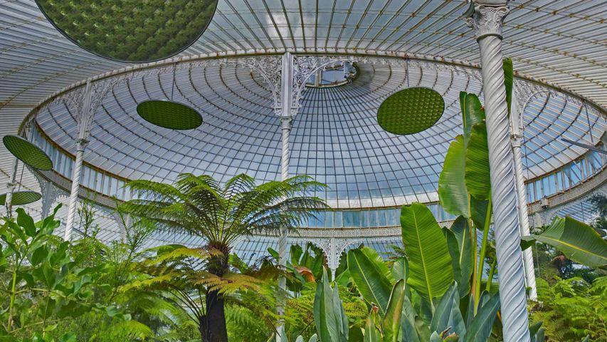 格拉斯哥女王公园玻璃温室内的景象,英国