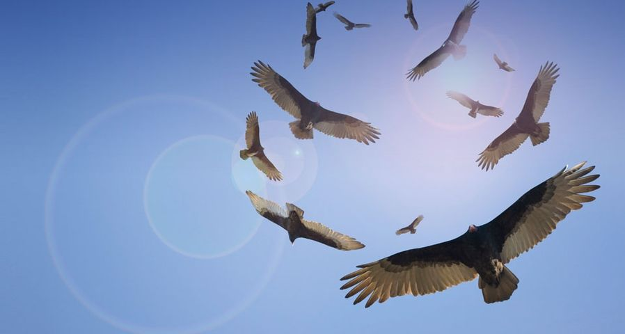 Vultures circle overhead
