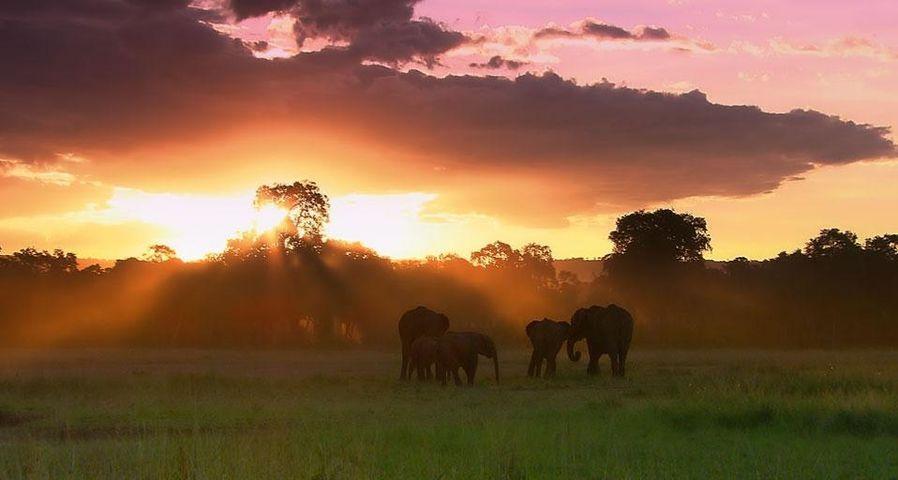 Un troupeau d'éléphants dans la réserve nationale du Masai Mara, Kenya