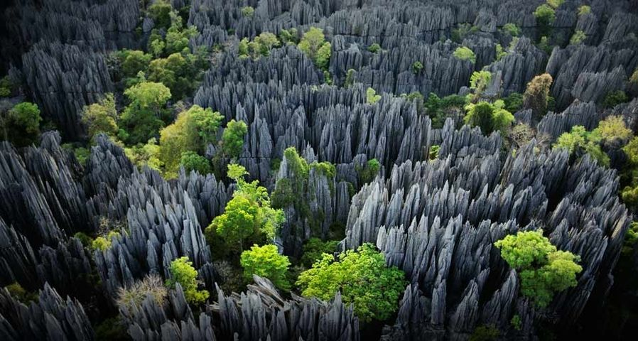 Karst limestone formations in Tsingy de Bemaraha Strict Nature Reserve, Madagascar