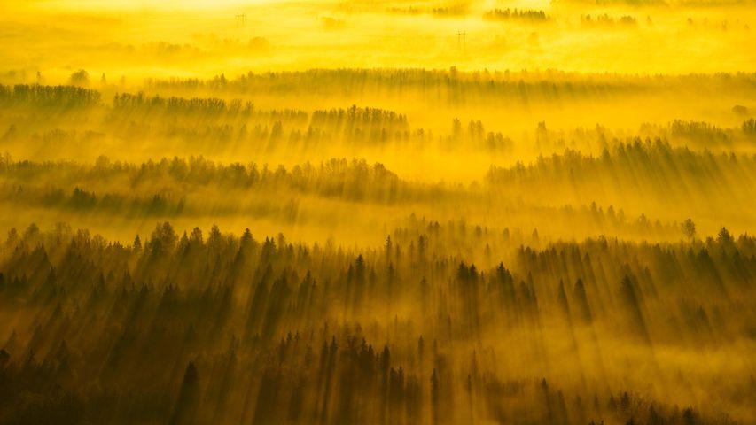 横跨塔尔图县的阳光,爱沙尼亚