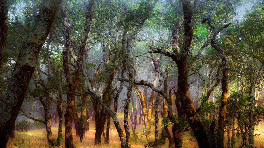 Foothill Regional Park near Windsor, California