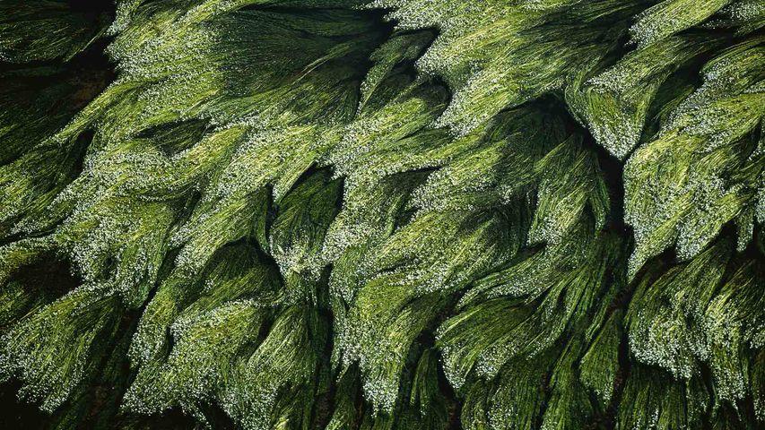 Végétation subaquatique dans la Loire près de Digoin, Saône-et-Loire