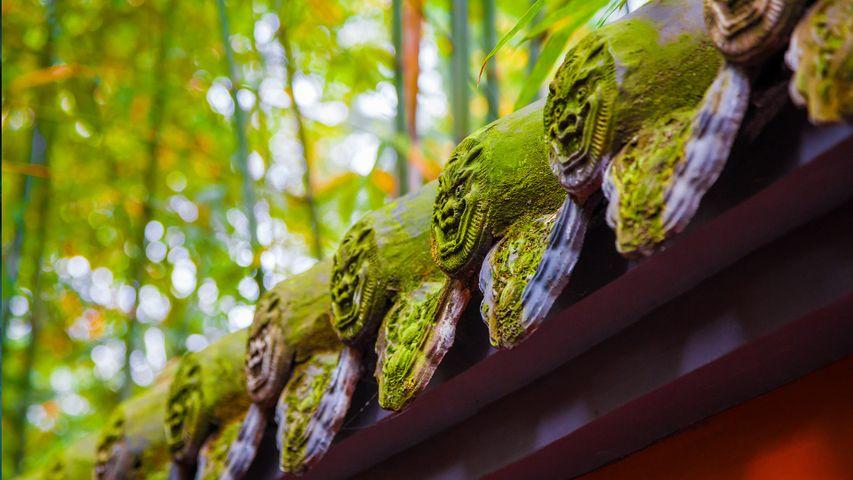 【今日立夏】武侯祠内的红墙绿竹林,中国成都