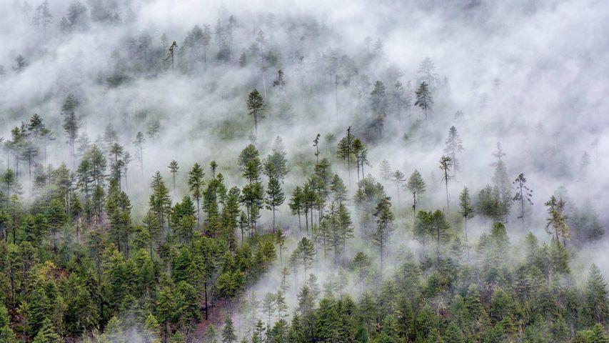 【今日霜降】林芝市的云雾森林,西藏高原