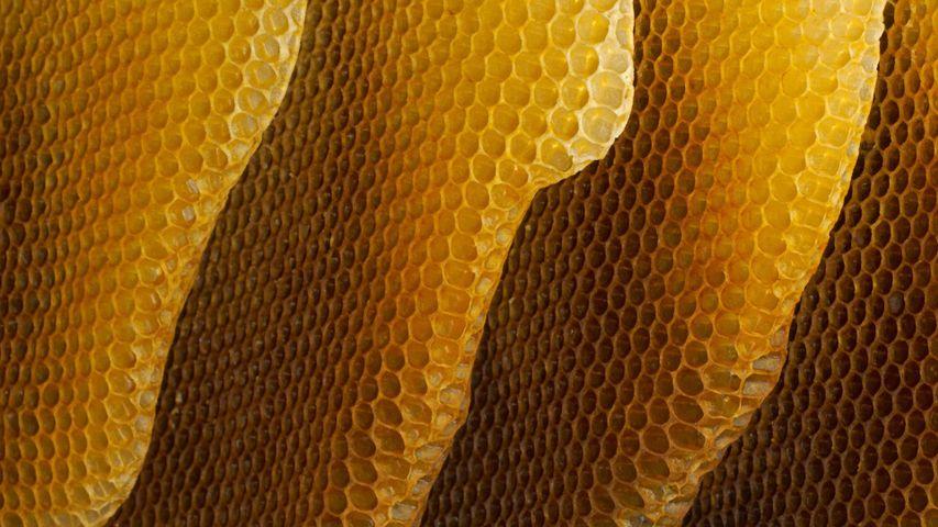 「ミツバチの巣」ドイツ, ヴュルツブルク