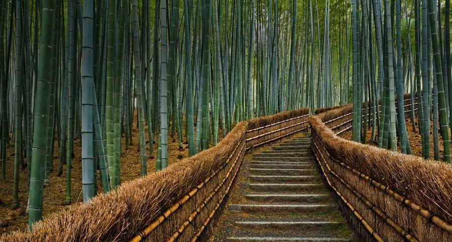 Bamboo lined path at Adashino Nembutsu-ji temple in Kyoto, Japan
