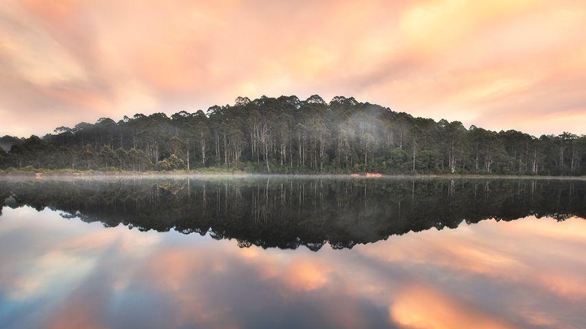 Karri forest at Beedelup Lake in Pemberton, Western Australia