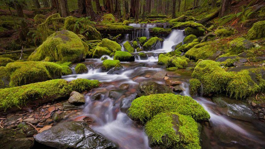 Sol Duc Valley region of Olympic National Park, Washington