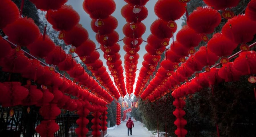 Lanterns hung to mark the upcoming Chinese New Year in the Altar of Earth park in Beijing, China