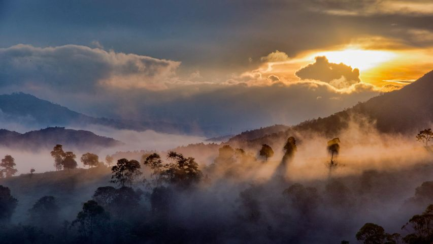 Mist over the forests of Idukki, Western Ghats in Kerala, India