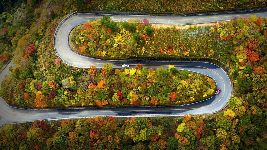 Autumn color on the Mount Ibuki Driveway in Maibara, Shiga, Japan