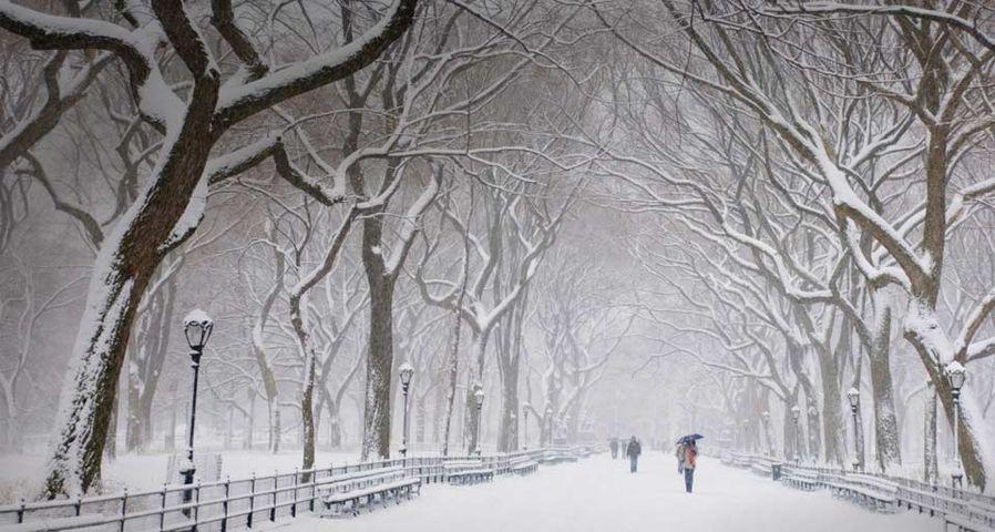 纽约中央公园的冬天