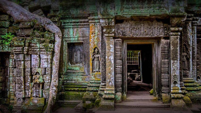 Ta Prohm-Tempel in der Region Angkor, Kambodscha