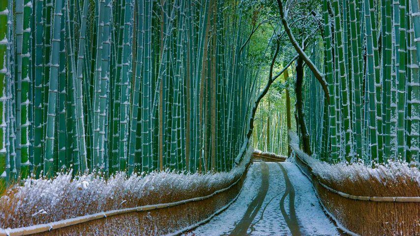 Forêt de bambous de Sagano, Arashiyama, Kyoto, Japon