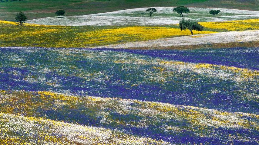 Spring flowers in Alentejo, Portugal