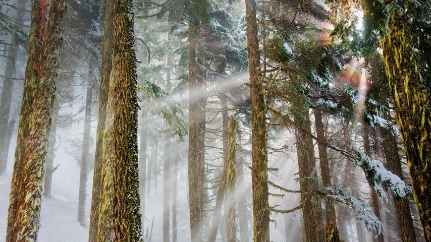Mount Baker-Snoqualmie National Forest, Washington, USA