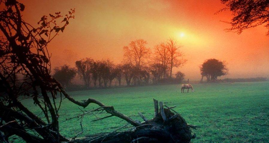 Sunrise over a meadow near Swansea, Wales