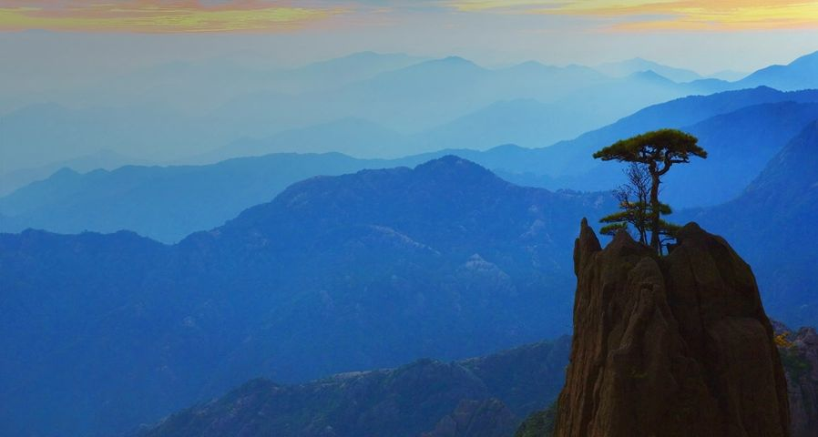 黄山白云景区的松树