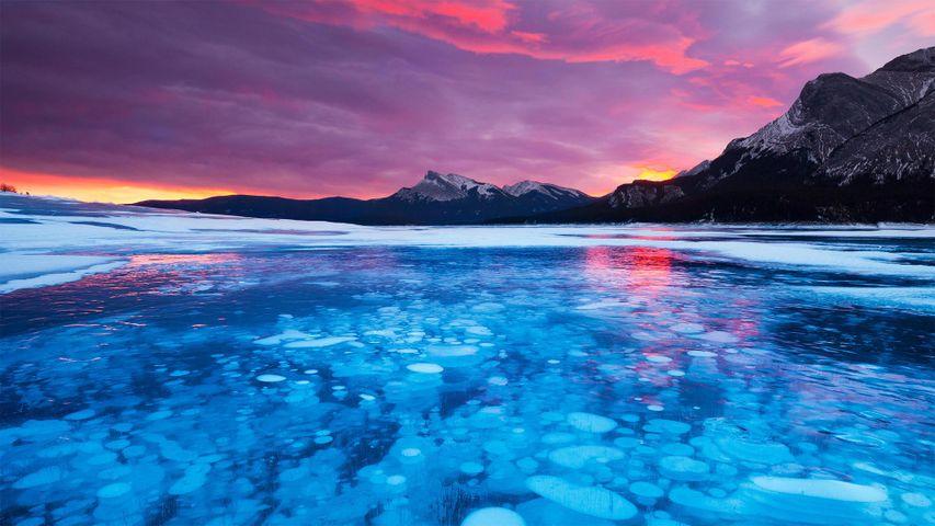 Burbujas heladas en el lago Abraham de Alberta, Canadá