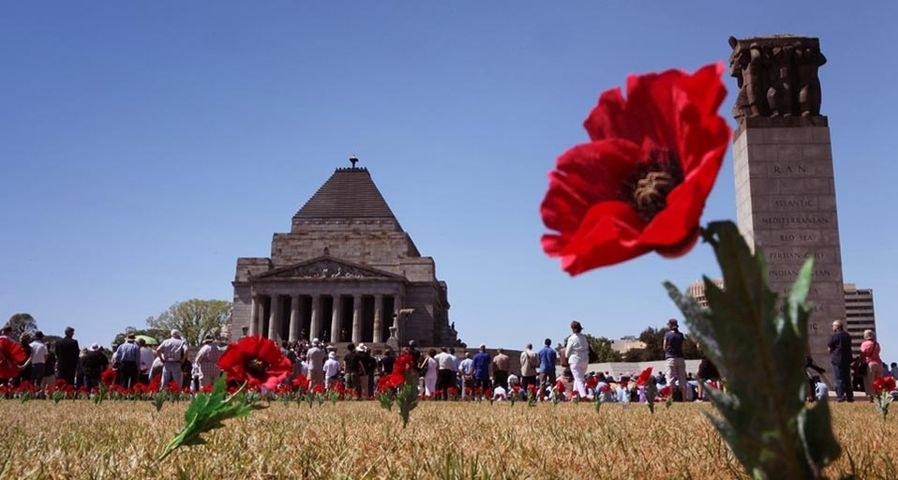 Poppy flowers are placed in front of the Shrine of Remembrance to mark Remembrance Day in Melbourne, November 11, 2009