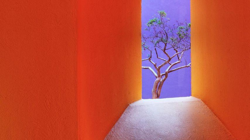 Orange corridor, San José del Cabo, Mexico