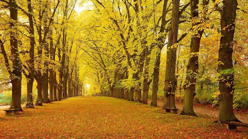 Herbstliche Allee, Dinkelsbühl, Bayern, Deutschland