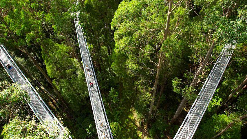 Otway Fly Treetop walkways, Australia