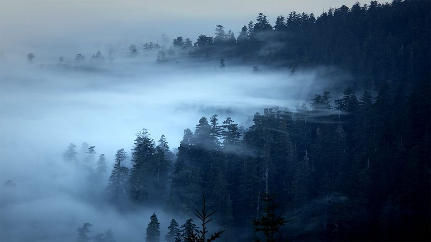 The Redwood National and State Parks of California