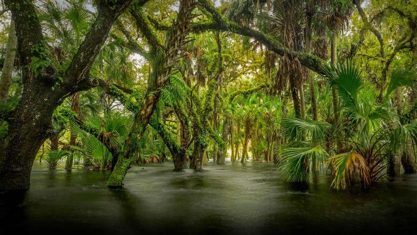 「マイオークカ川州立公園」米国フロリダ州