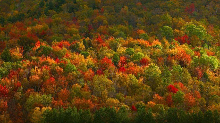 Herbstfärbung von Bäumen im Hudson Valley, Bundesstaat New York, USA