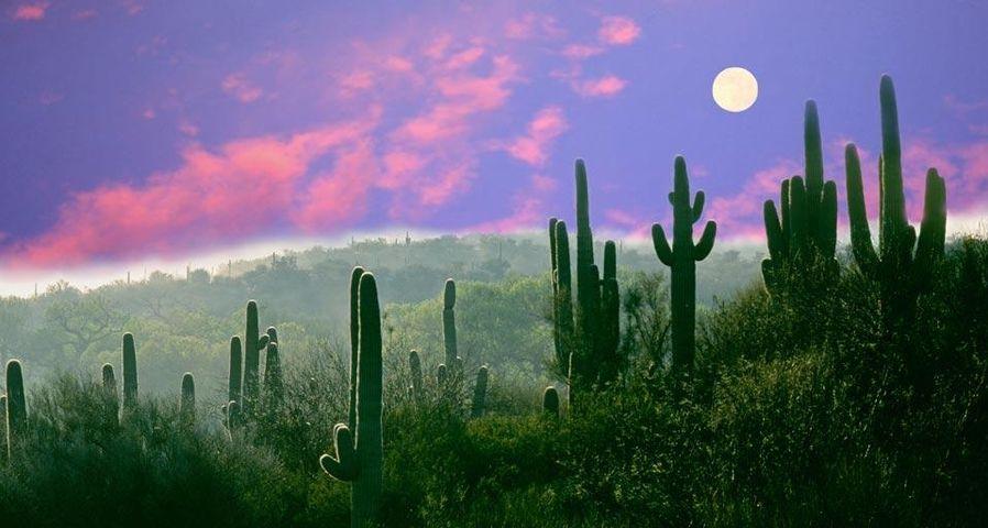 Full moon over the Sonoran Desert in Saguaro National Park, Arizona